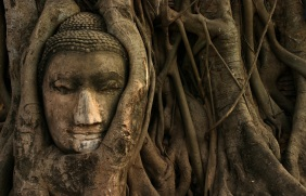 buddha tree thailand wallpaper hd